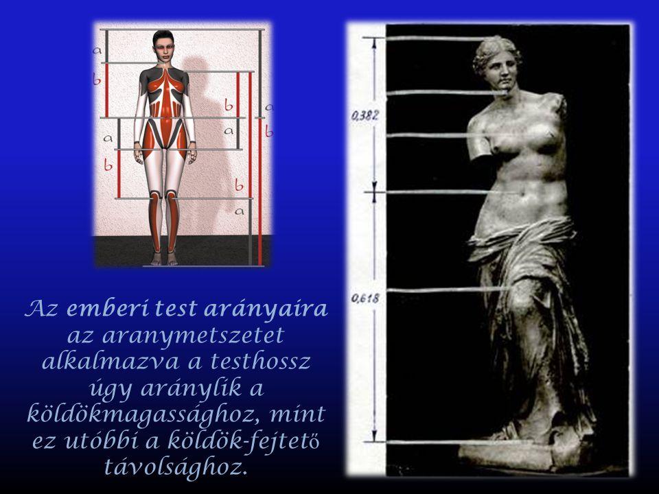 Az emberi test arányaira az aranymetszetet alkalmazva a testhossz úgy aránylik a köldökmagassághoz, mint ez utóbbi a köldök-fejtető távolsághoz.