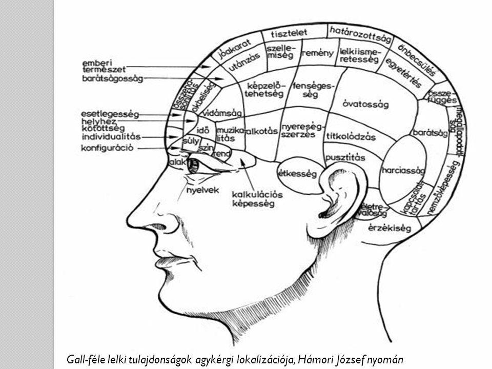 Gall-féle lelki tulajdonságok agykérgi lokalizációja, Hámori József nyomán