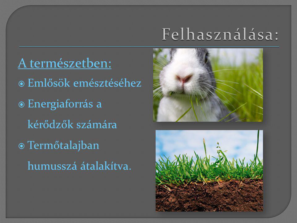 Felhasználása: A természetben: Emlősök emésztéséhez