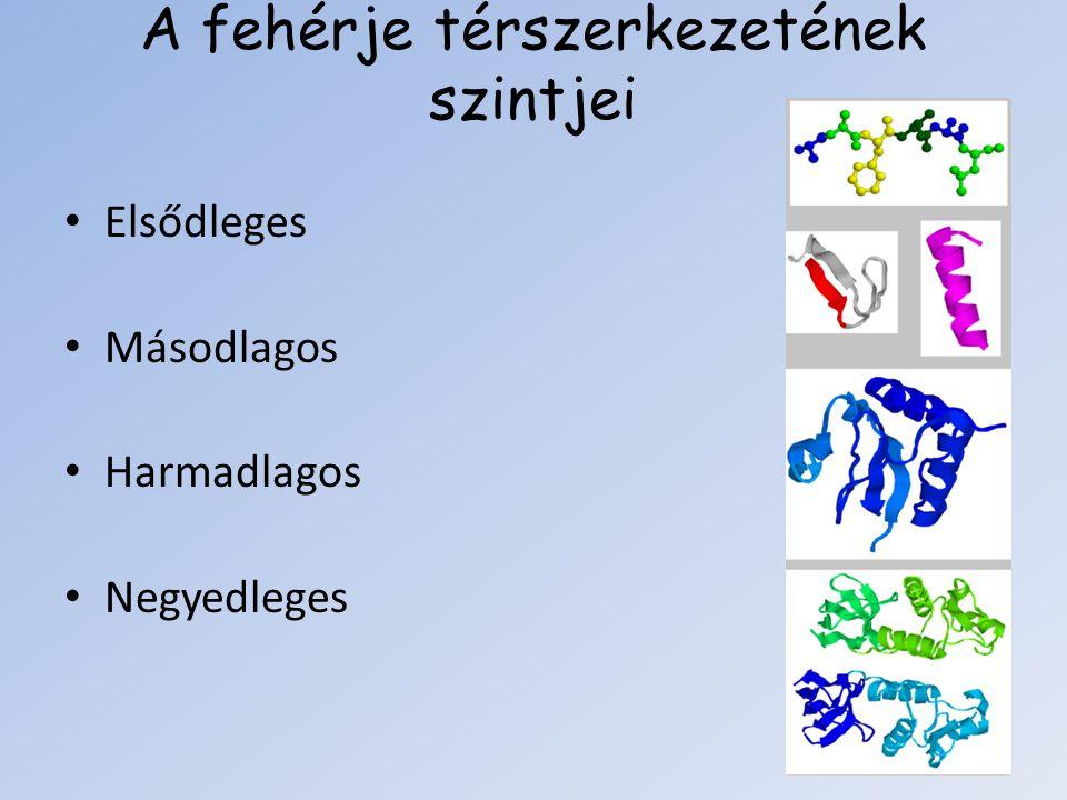 A fehérje térszerkezetének szintjei