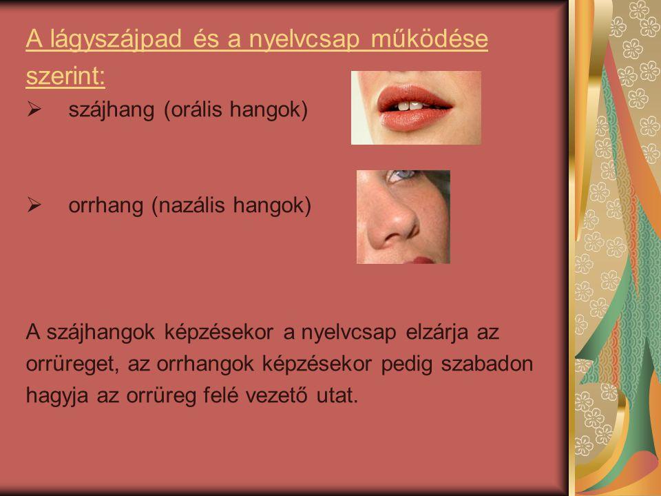 A lágyszájpad és a nyelvcsap működése szerint: