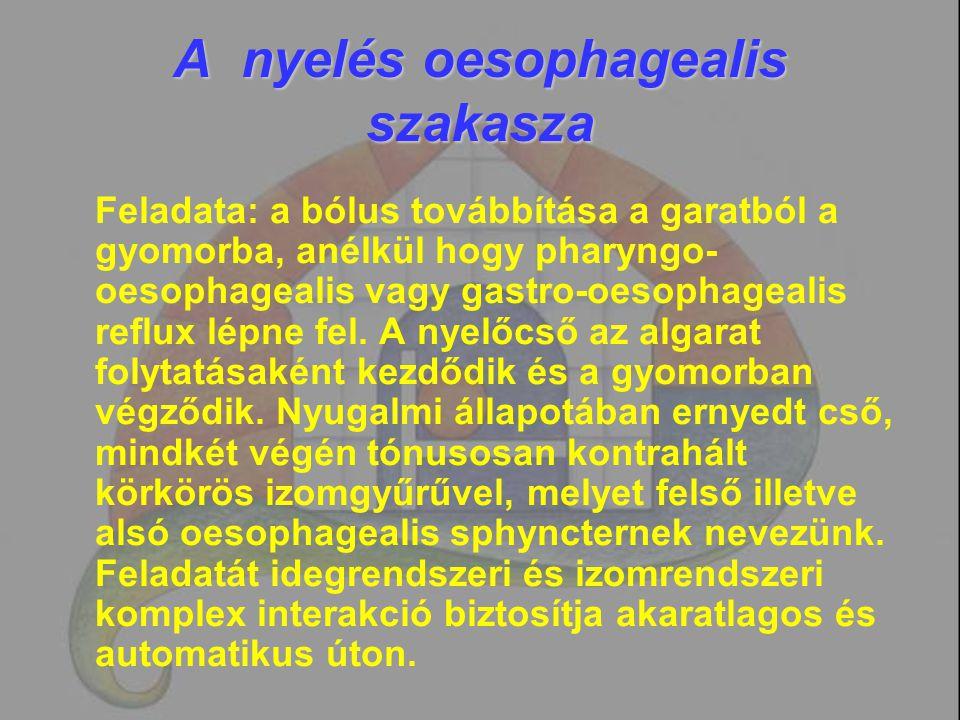 A nyelés oesophagealis szakasza