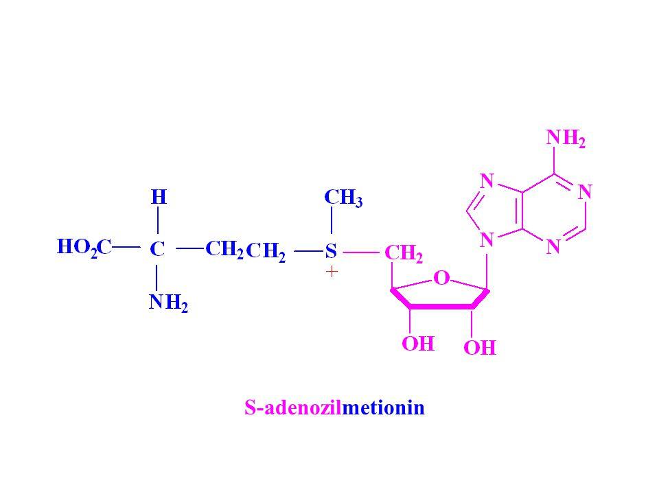 S-adenozilmetionin