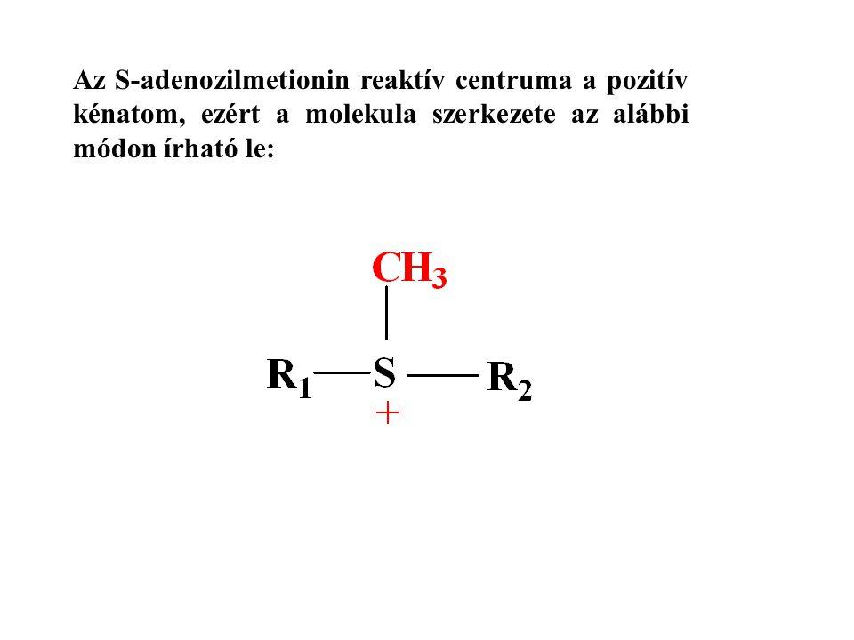 Az S-adenozilmetionin reaktív centruma a pozitív kénatom, ezért a molekula szerkezete az alábbi módon írható le: