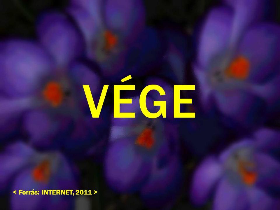 VÉGE < Forrás: INTERNET, 2011 >