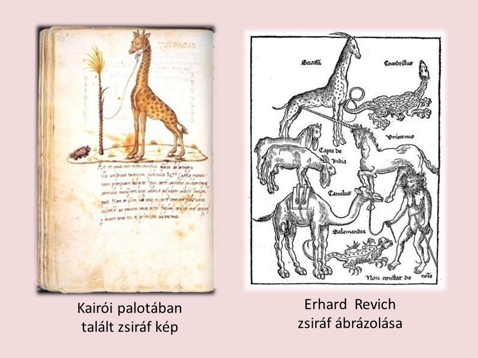 Erhard Revich zsiráf ábrázolása Kairói palotában talált zsiráf kép