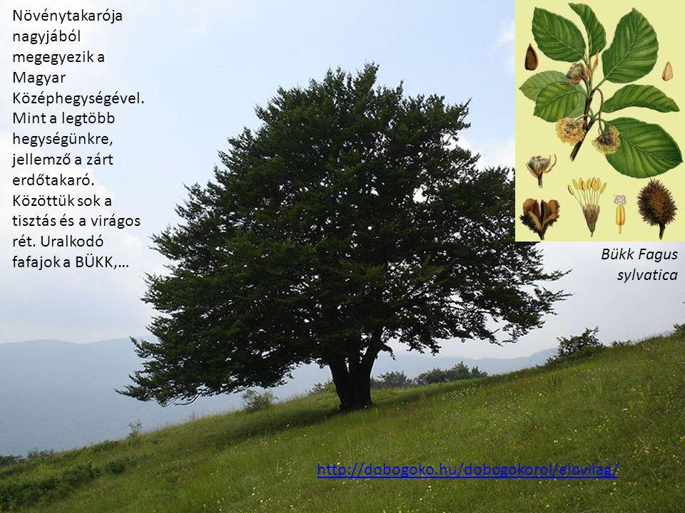 Növénytakarója nagyjából megegyezik a Magyar Középhegységével
