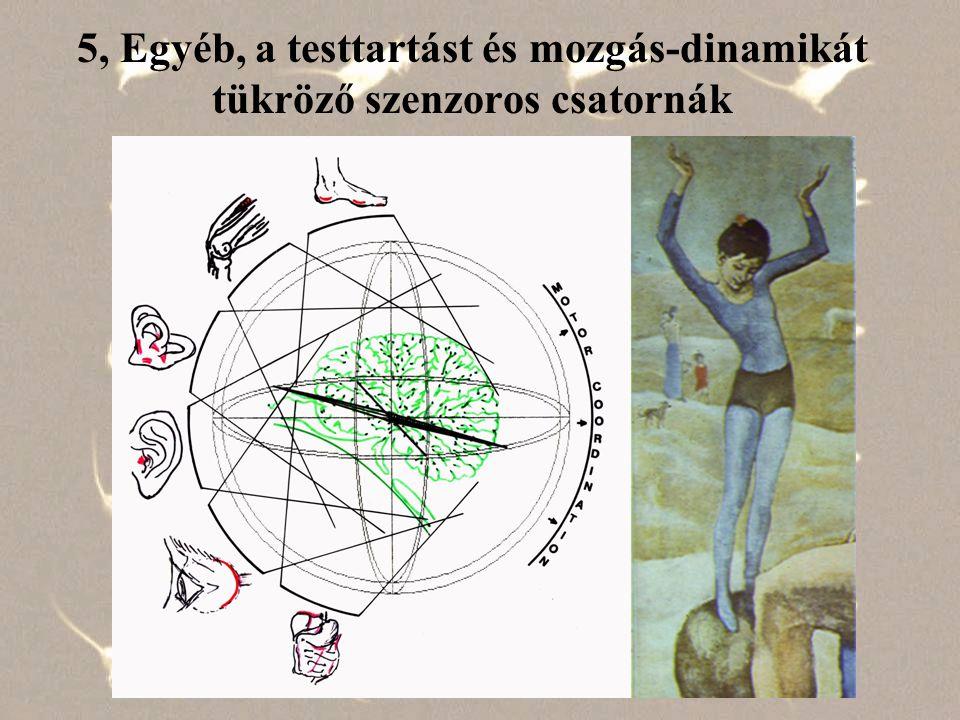 5, Egyéb, a testtartást és mozgás-dinamikát tükröző szenzoros csatornák