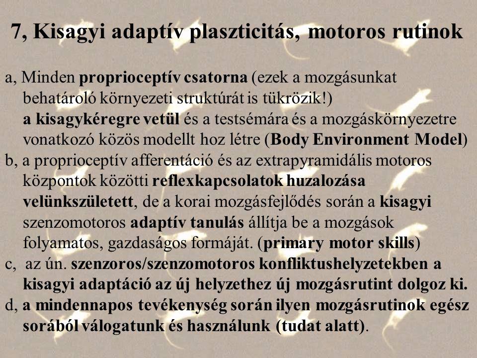 7, Kisagyi adaptív plaszticitás, motoros rutinok