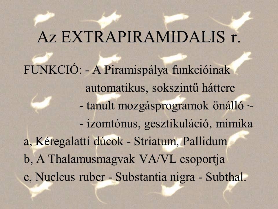 Az EXTRAPIRAMIDALIS r. FUNKCIÓ: - A Piramispálya funkcióinak