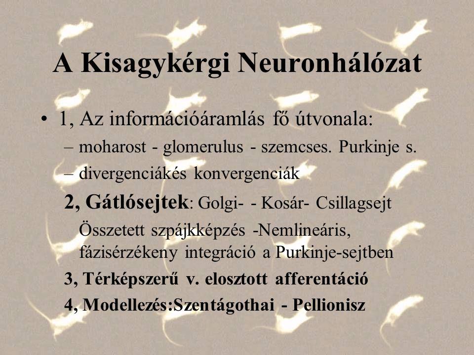 A Kisagykérgi Neuronhálózat