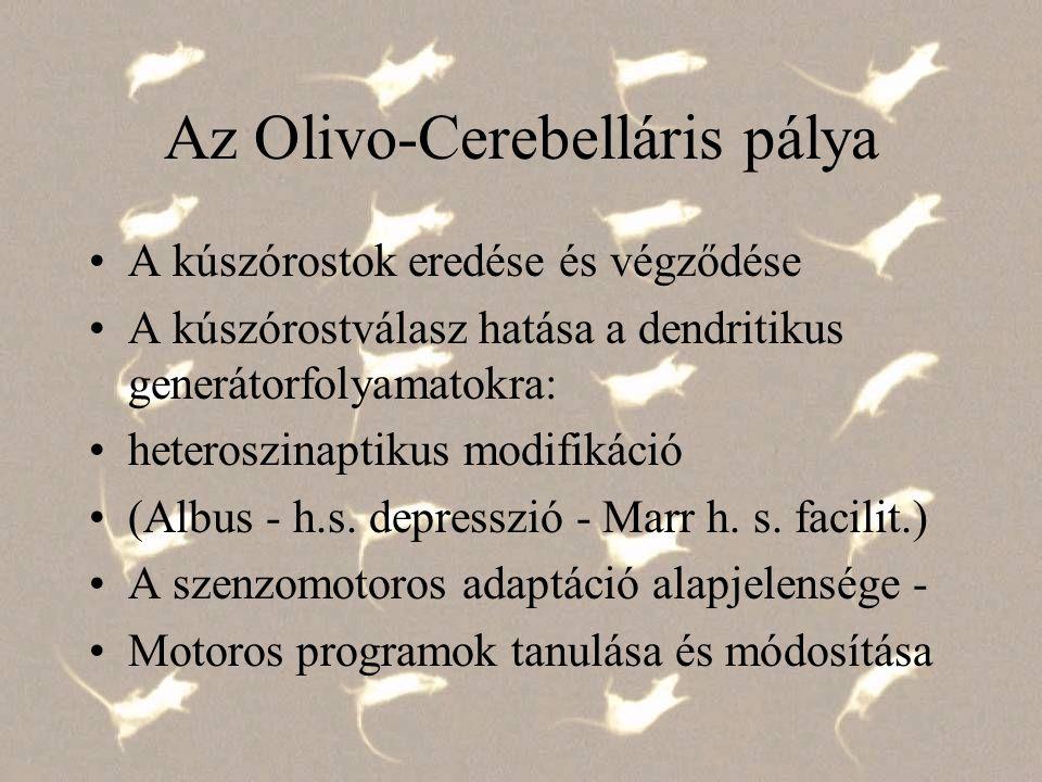 Az Olivo-Cerebelláris pálya