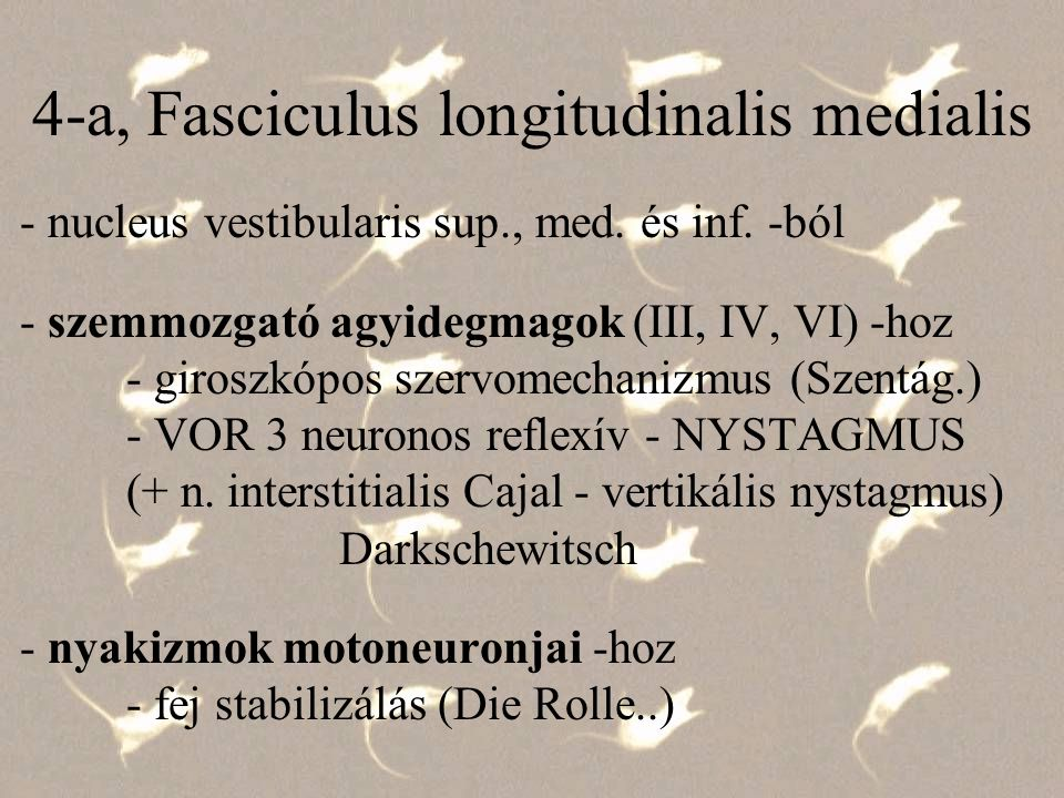 4-a, Fasciculus longitudinalis medialis