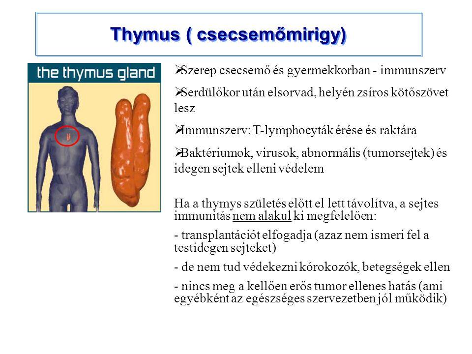 Thymus ( csecsemőmirigy)