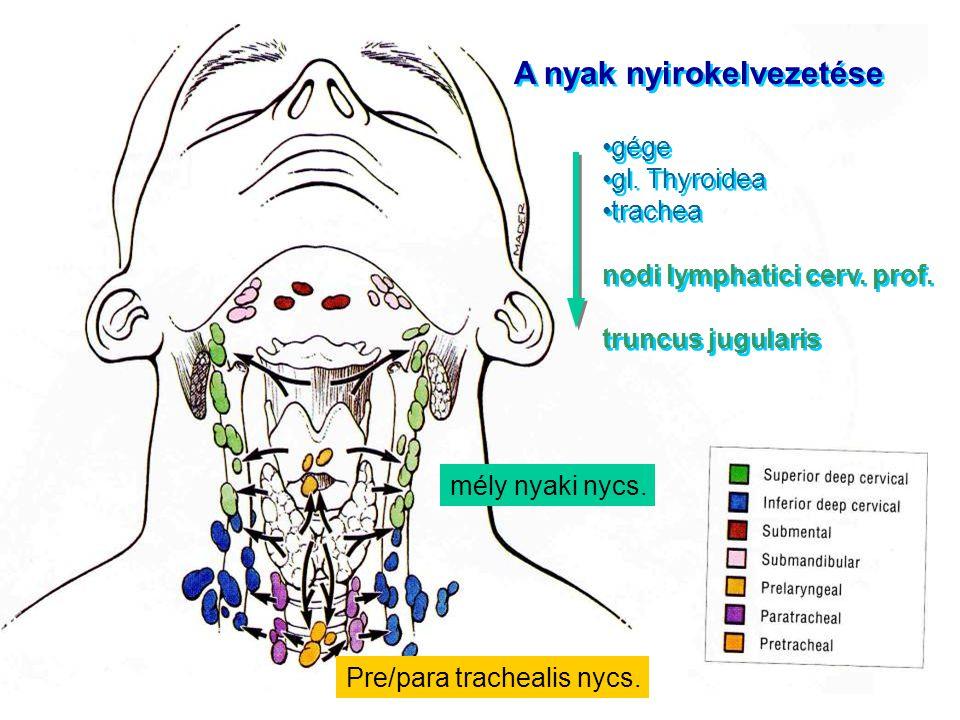 A nyak nyirokelvezetése