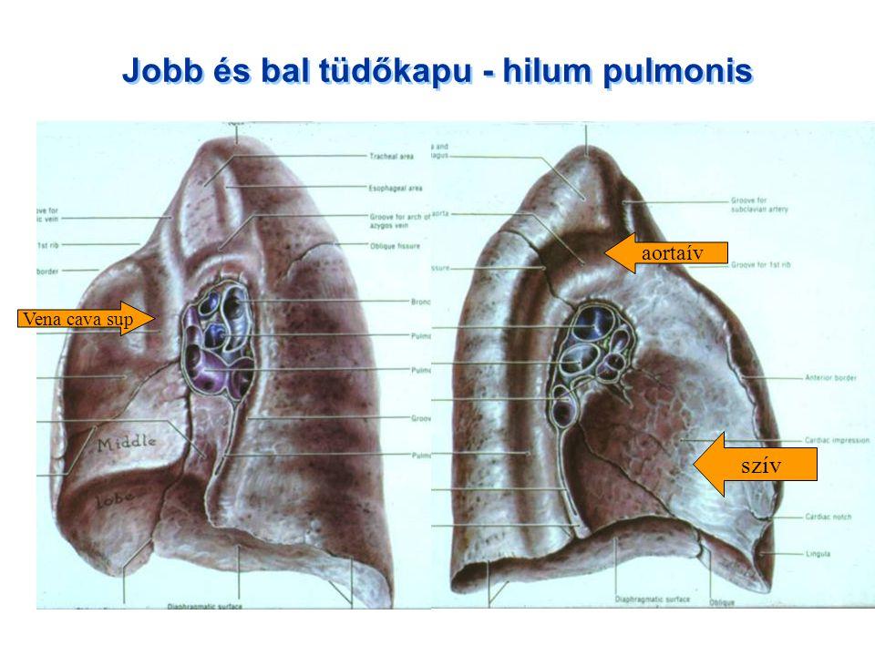 Jobb és bal tüdőkapu - hilum pulmonis
