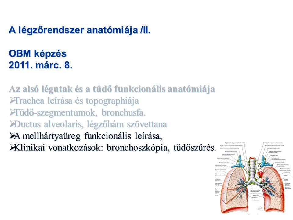 A légzőrendszer anatómiája /II.