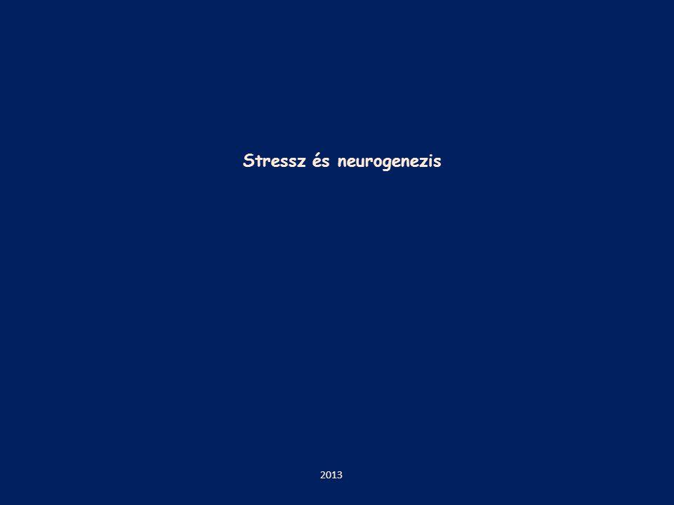 Stressz és neurogenezis