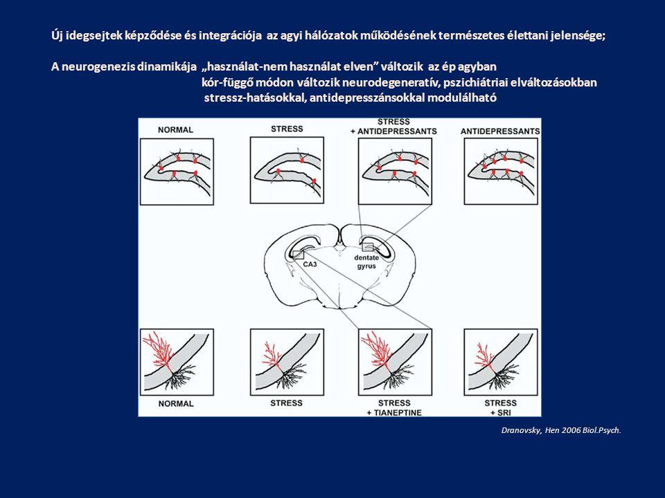 stressz-hatásokkal, antidepresszánsokkal modulálható