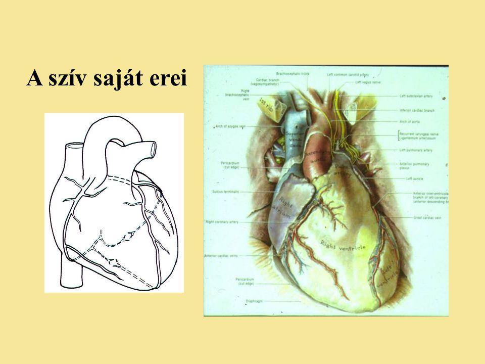 A szív saját erei