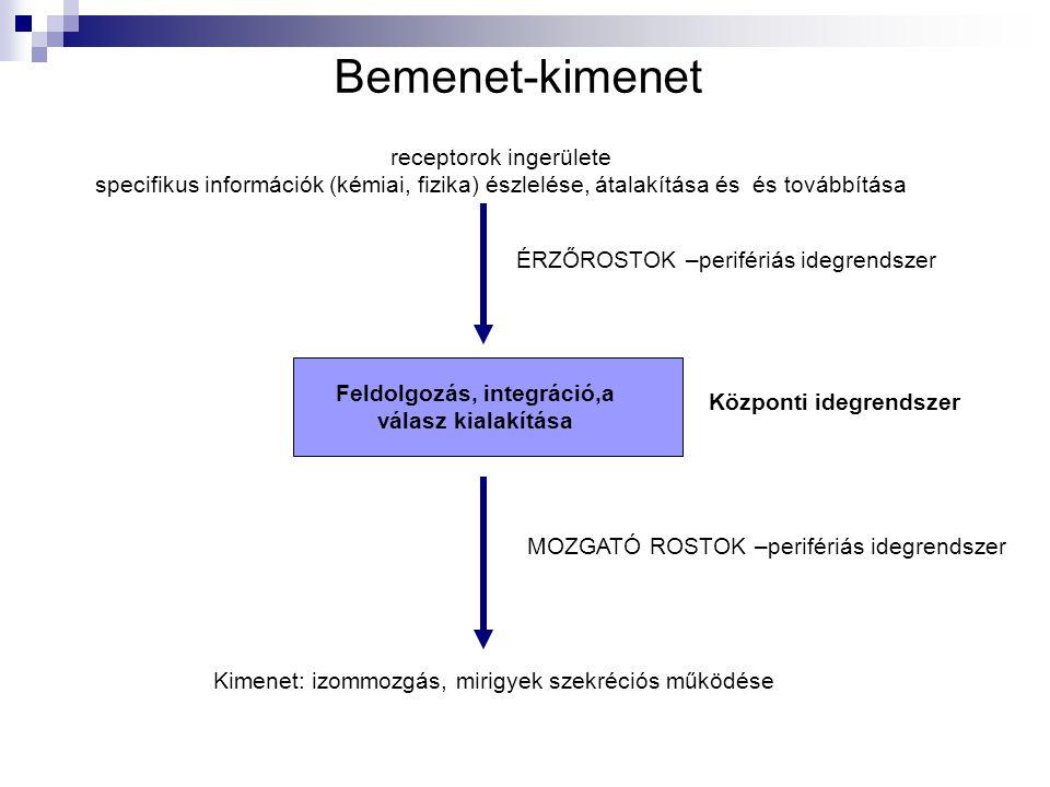 Feldolgozás, integráció,a válasz kialakítása