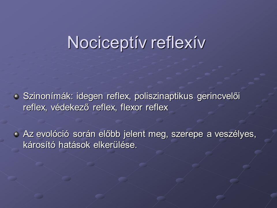 Nociceptív reflexív Szinonímák: idegen reflex, poliszinaptikus gerincvelői reflex, védekező reflex, flexor reflex.