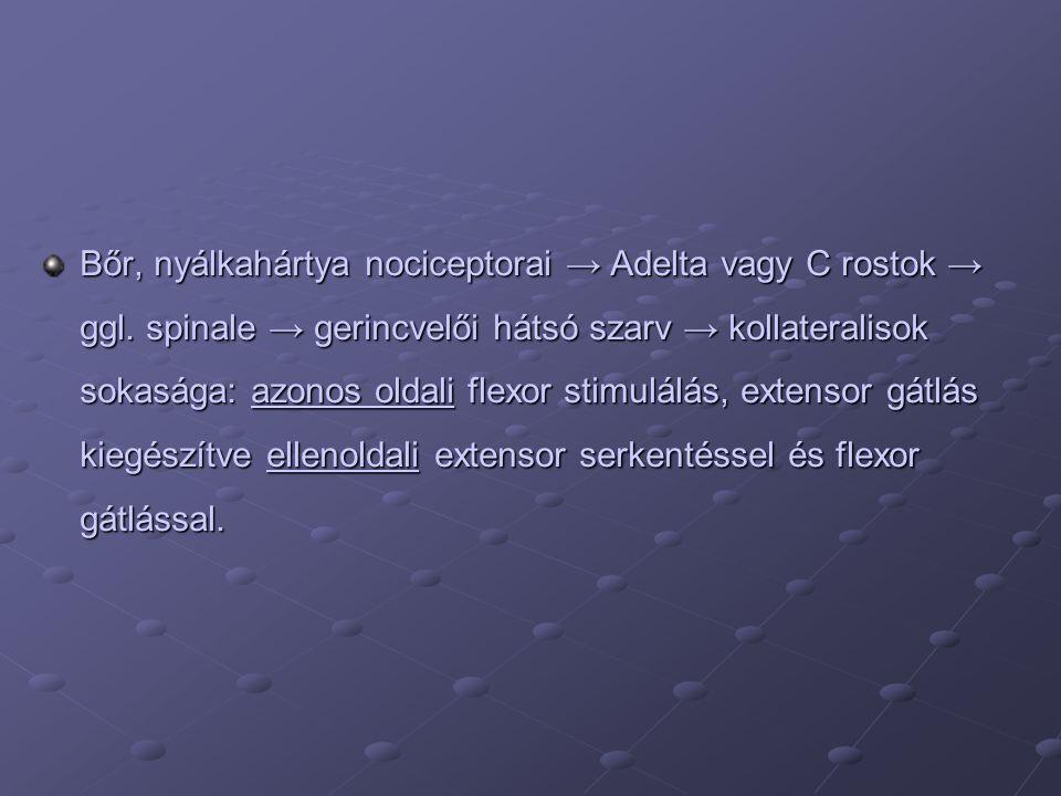 Bőr, nyálkahártya nociceptorai → Adelta vagy C rostok → ggl