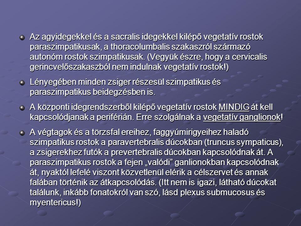 Az agyidegekkel és a sacralis idegekkel kilépő vegetatív rostok paraszimpatikusak, a thoracolumbalis szakaszról származó autonóm rostok szimpatikusak. (Vegyük észre, hogy a cervicalis gerincvelőszakaszból nem indulnak vegetatív rostok!)