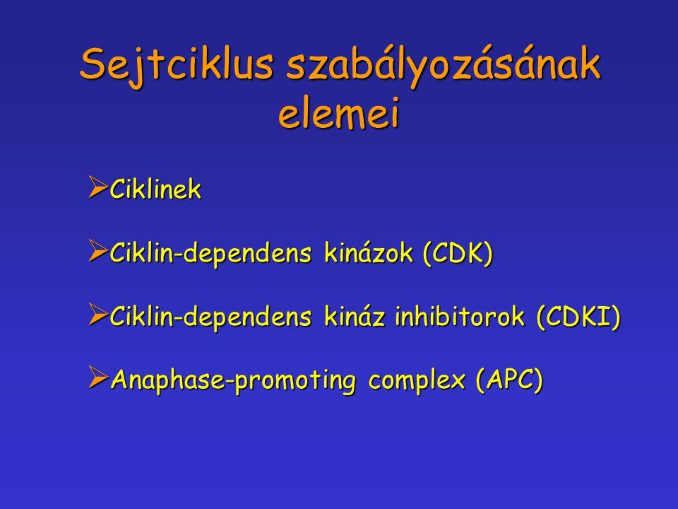 Sejtciklus szabályozásának elemei