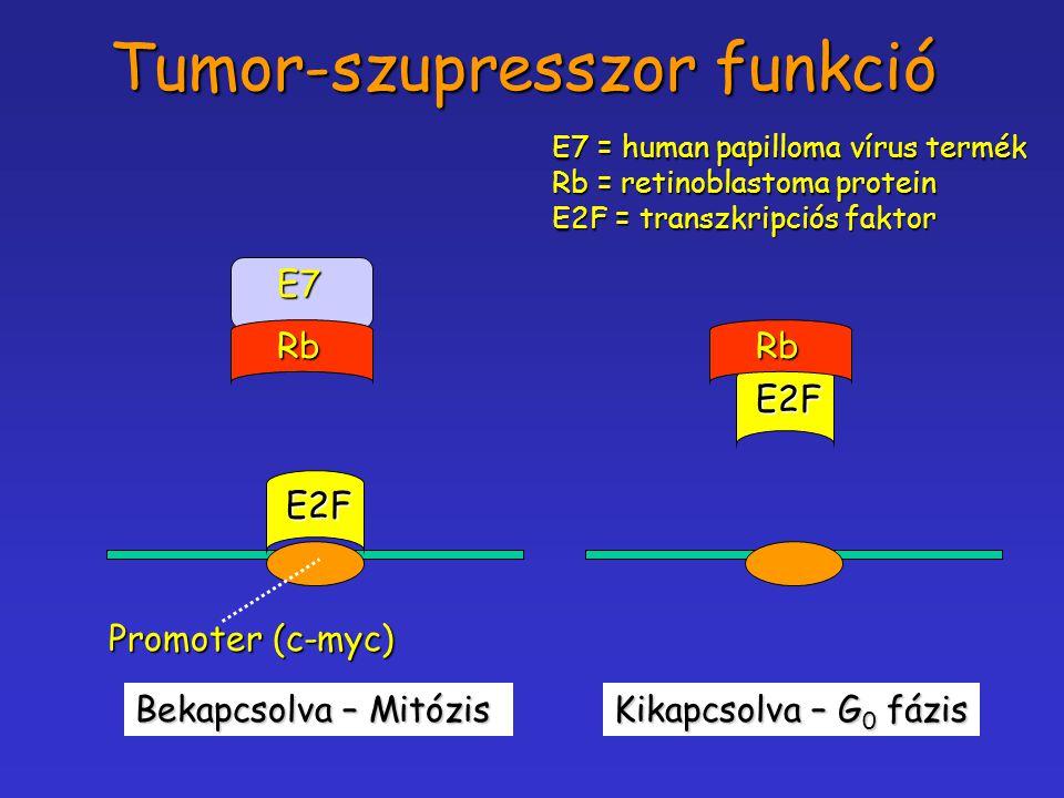 Tumor-szupresszor funkció