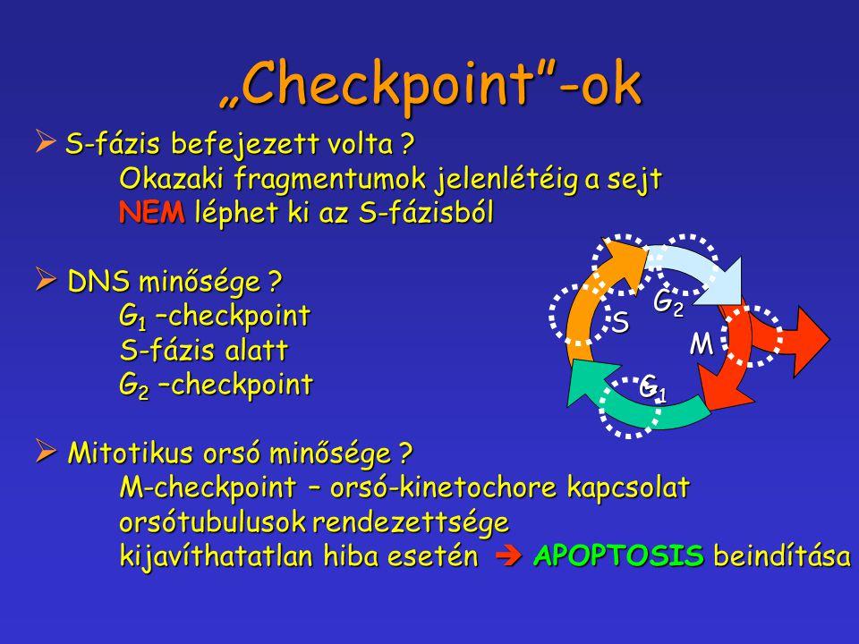 """""""Checkpoint -ok S-fázis befejezett volta"""