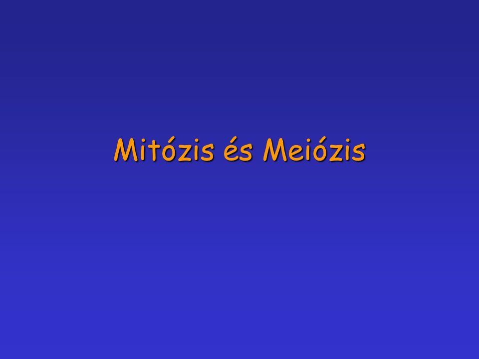 Mitózis és Meiózis