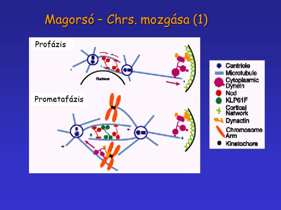 Magorsó – Chrs. mozgása (1)