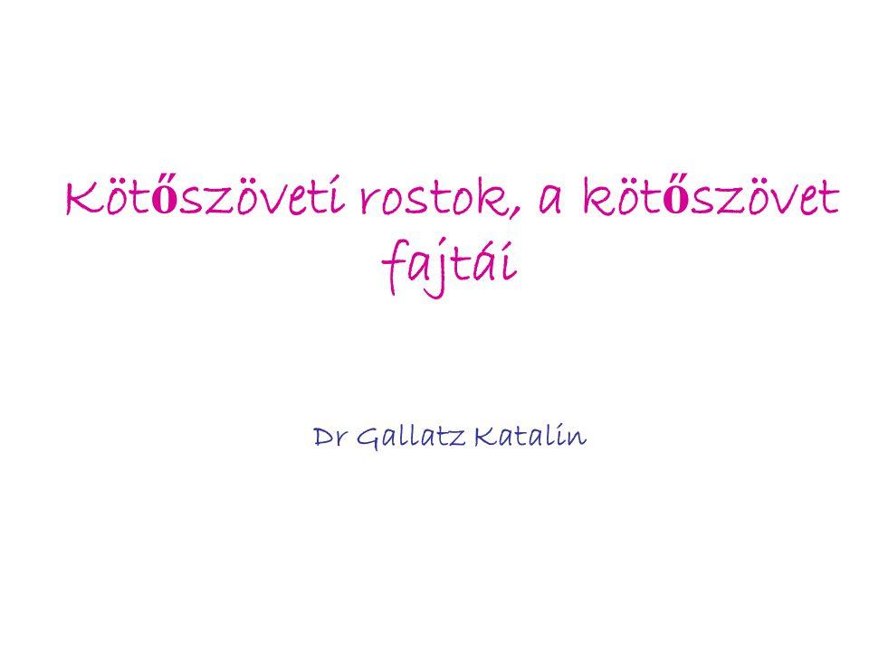 Kötőszöveti rostok, a kötőszövet fajtái Dr Gallatz Katalin
