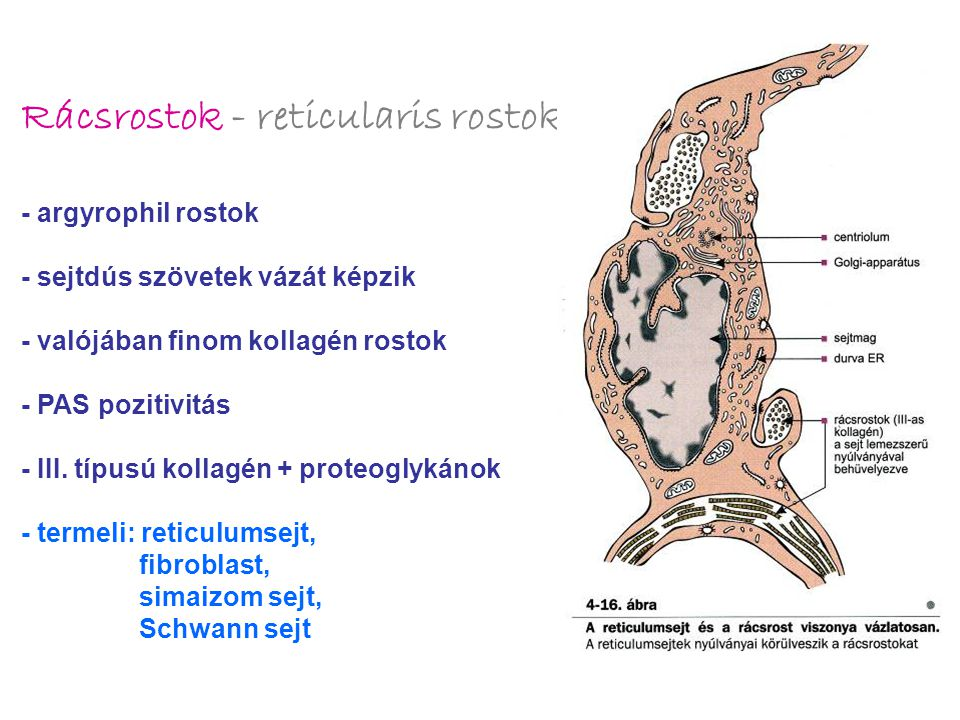 Rácsrostok - reticularis rostok