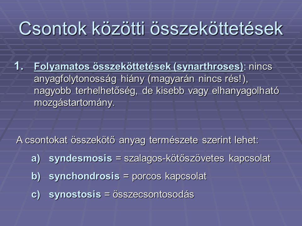 Csontok közötti összeköttetések