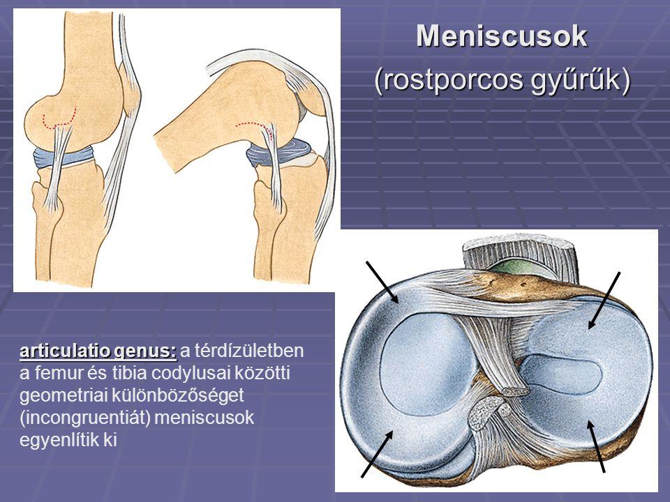 Meniscusok (rostporcos gyűrűk)
