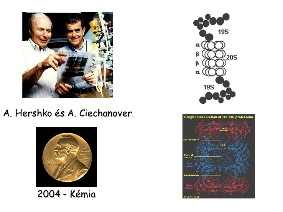 A. Hershko és A. Ciechanover,
