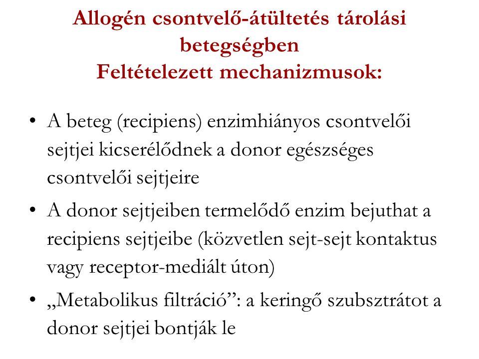 Allogén csontvelő-átültetés tárolási betegségben Feltételezett mechanizmusok: