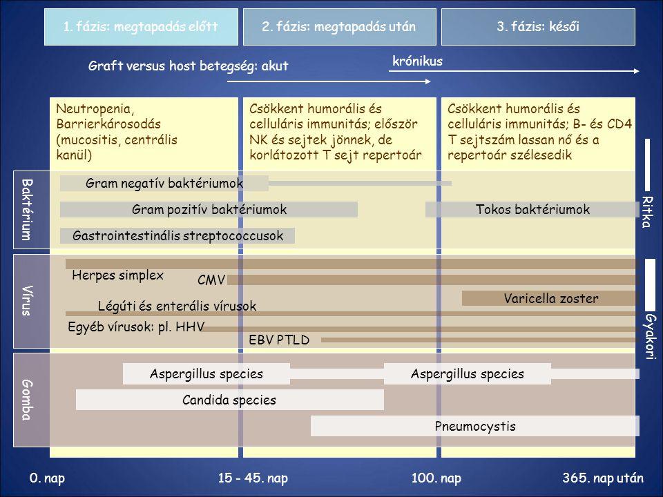 1. fázis: megtapadás előtt 2. fázis: megtapadás után 3. fázis: késői