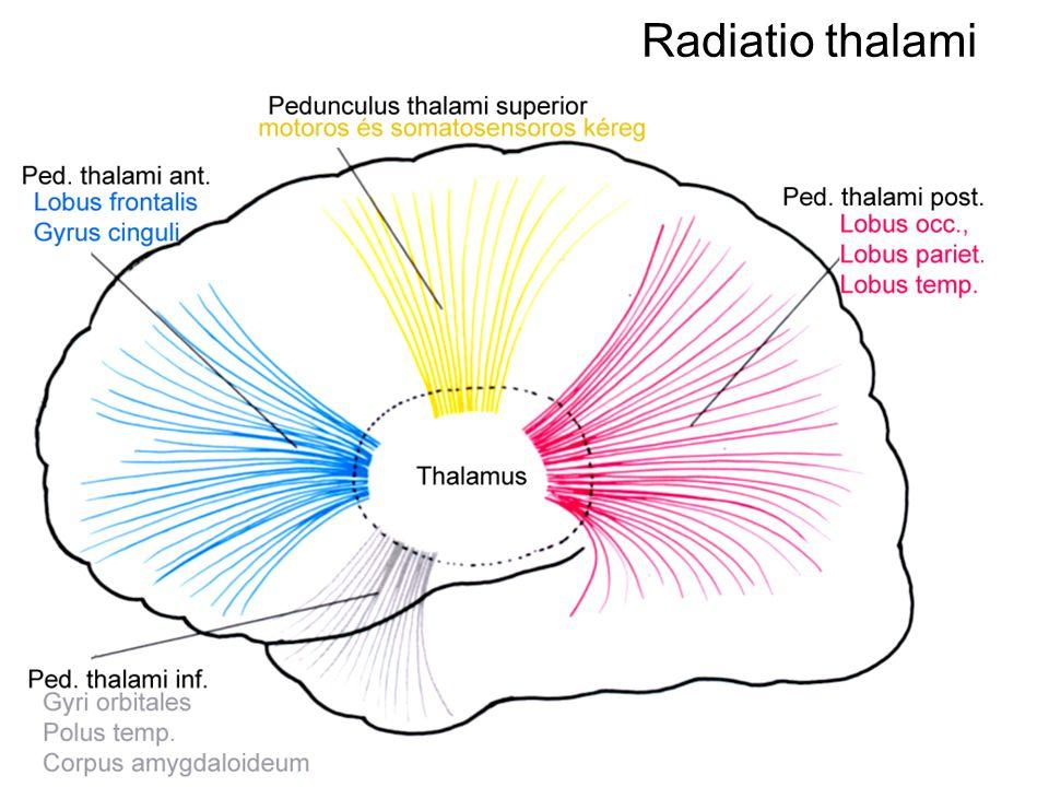 Radiatio thalami