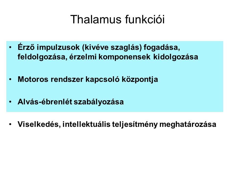Thalamus funkciói Érző impulzusok (kivéve szaglás) fogadása, feldolgozása, érzelmi komponensek kidolgozása.