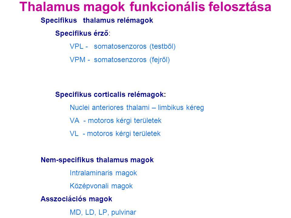 Thalamus magok funkcionális felosztása