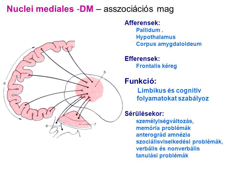 Nuclei mediales -DM – asszociációs mag