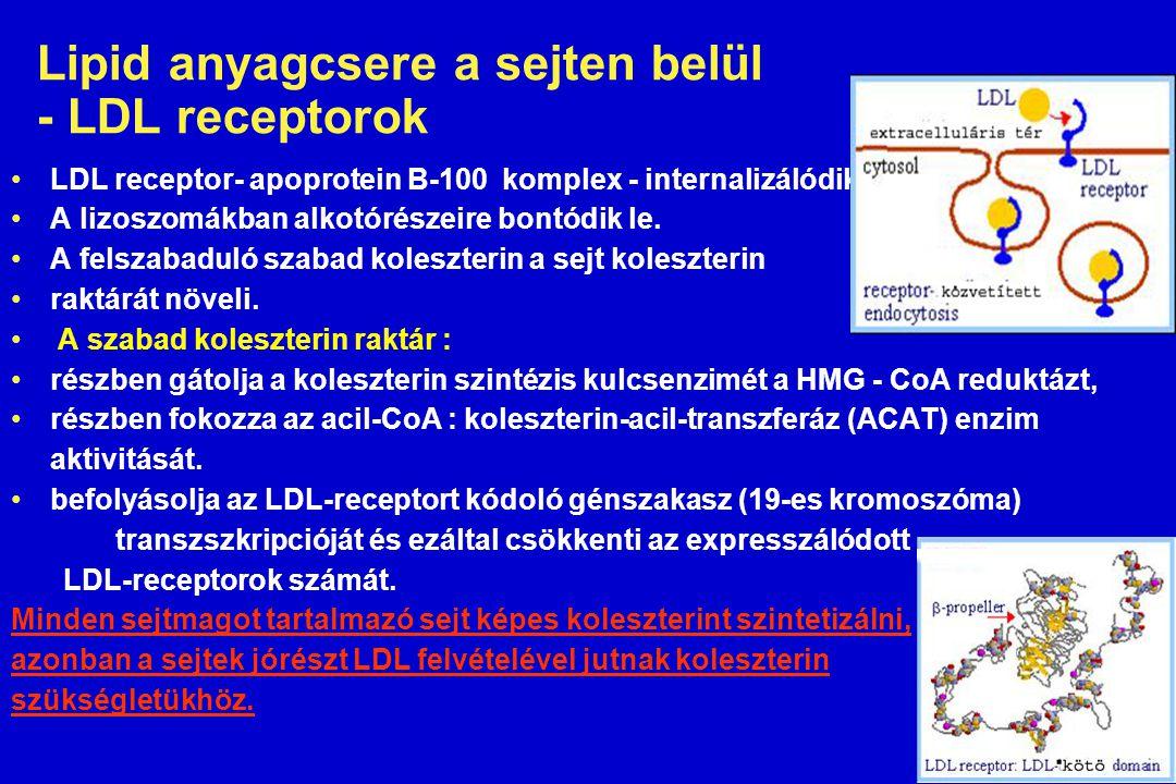 Lipid anyagcsere a sejten belül - LDL receptorok