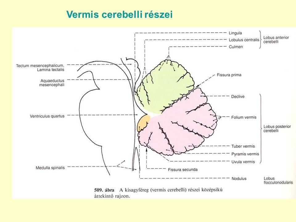 Vermis cerebelli részei