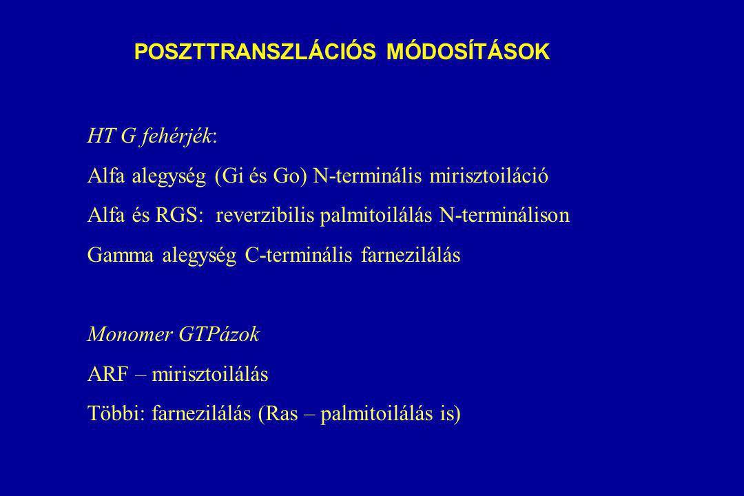 POSZTTRANSZLÁCIÓS MÓDOSÍTÁSOK