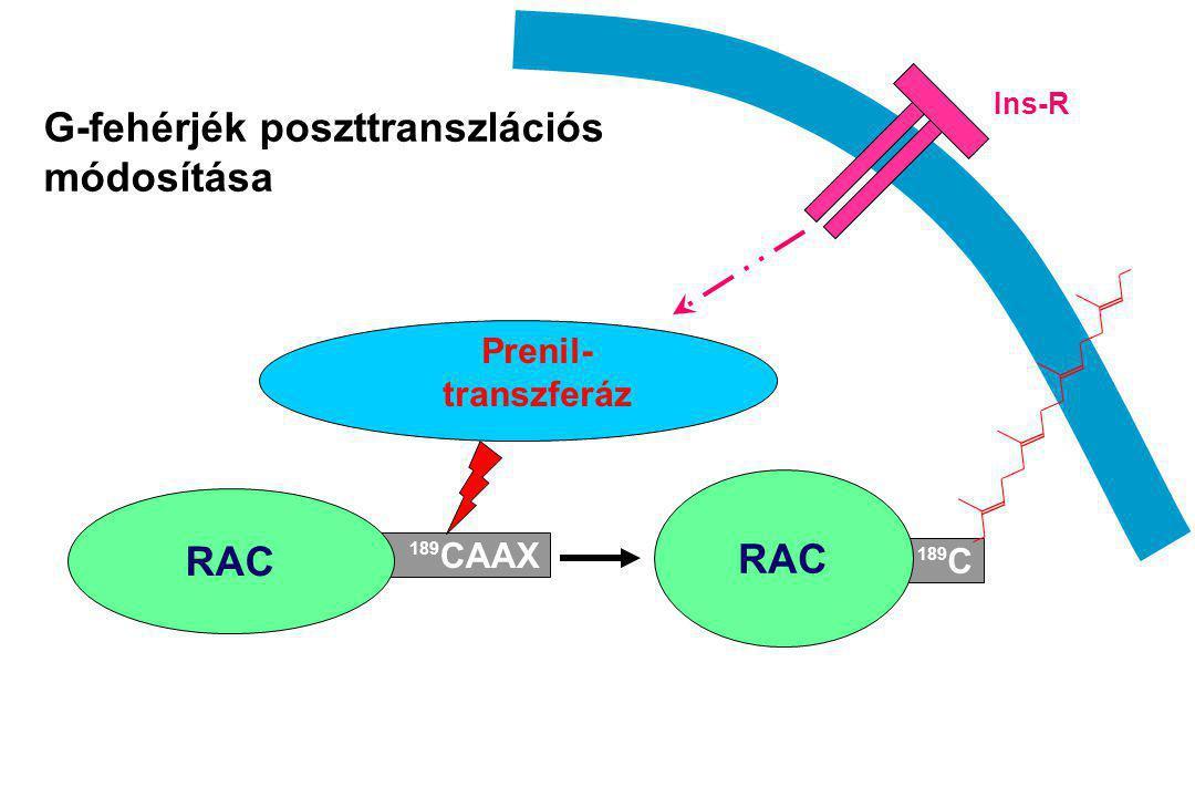 G-fehérjék poszttranszlációs módosítása