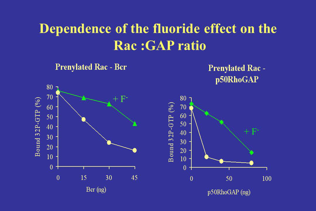 Dependence of the fluoride effect on the Rac :GAP ratio