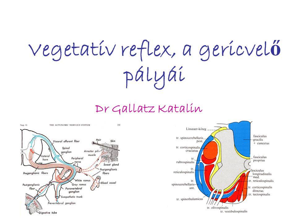 Vegetatív reflex, a gericvelő pályái